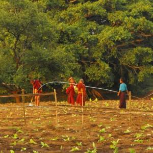 circuit-trek-birmanie (4)